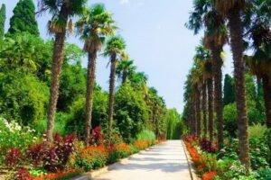 Веб-камеры Никитский ботанический сад