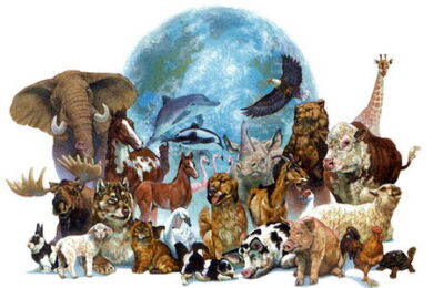 Веб-камеры Животные